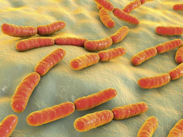 Picup onderzoek naar de werking van probiotica